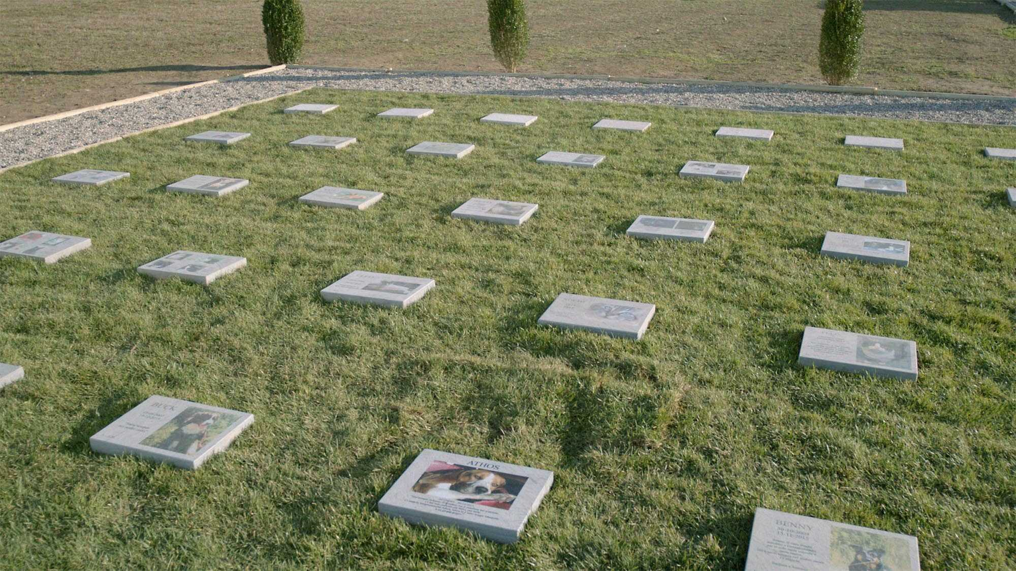 Cimitero per animali - MyPeterPan