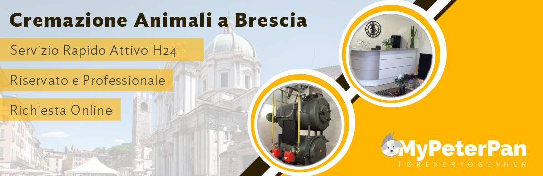 Cremazione animali Brescia - MyPeterPan