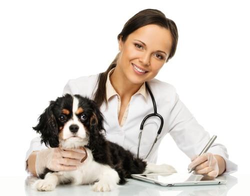 convenzione veterinari per cremazione animali MyPeterPan