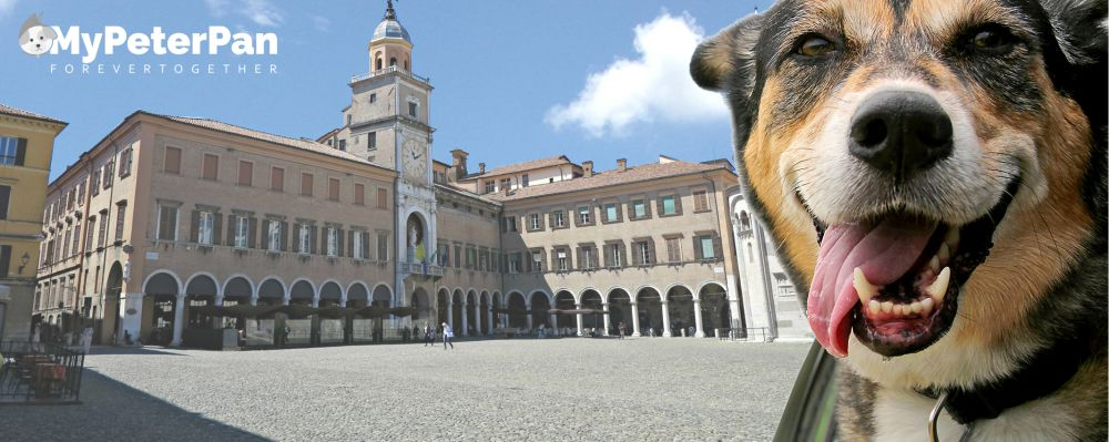 Cremazione Animali Modena - MyPeterPan